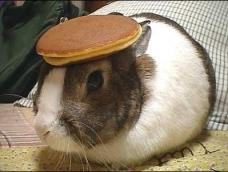 bunny_pancake
